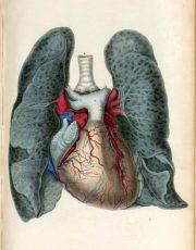 z-human-anatomy (1)