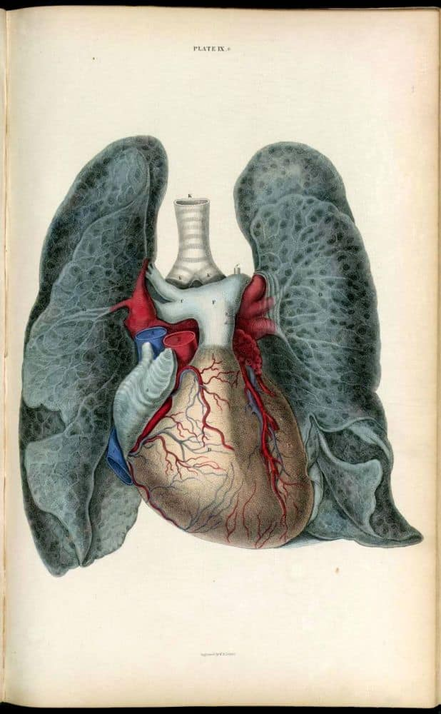 Vintage Anatomy Art And Book Illustrations Retrographik
