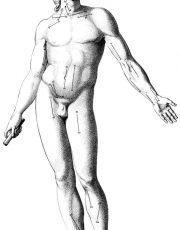 z-human-anatomy (2)