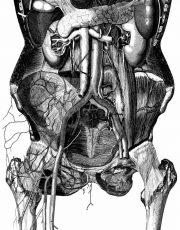 z-human-anatomy (4)