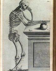 z-human-anatomy (5)
