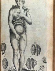 z-human-anatomy (6)
