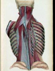 z-human-anatomy (9)