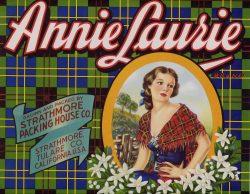 Annie Laurie 1940s Vintage Fruit Crate Label