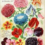 Bruces Popular Collections Vintage Seed Advertising Poster