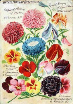 Bruce's Popular Collections, Vintage Seed Advertising Poster