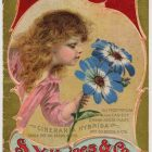 S.Y. Haine's and Co Vintage Seed Advertising Poster, 1899