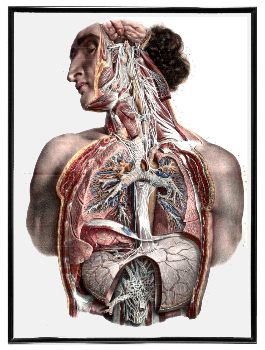 Vintage Anatomy Art and Book Illustrations - RetroGraphik